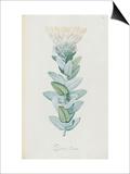 Description des plantes rares que l'on cultive à Navarre et à Malmaison Posters by Pierre Joseph Redouté