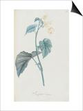Description des plantes rares que l'on cultive à Navarre et à Malmaison Prints by Pierre Joseph Redouté
