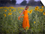 Novice Buddhist Monk Makes His Way Through a Field of Sunflowers as 10,000 Gather, Thailand Prints