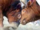 Two South Korean Bulls Lock Horns in the 2005 Bullfighting Festival in Seoul, South Korea Poster