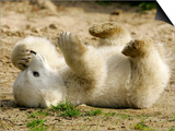 Polar Bear Cub, Berlin, Germany Prints by Franka Bruns