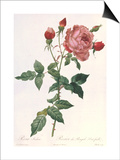 Bouquet of Rose, Anemone and Clematis Posters by Pierre-Joseph Redouté