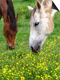 Horses Graze in a Green Field of Wildflowers Print