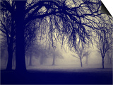 A Very Foggy Day in the Park Prints by  graphicphoto
