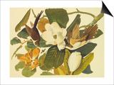 Black-Billed Cuckoo SwitchArt&#8482 Print by John James Audubon