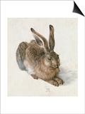 Hare, 1502 Poster by Albrecht Dürer