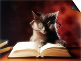 Gray Cat With Glasses Reading A Book Prints by  gila