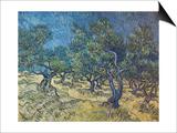 Olivenbaeume (Les Oiliviers), 1889 Prints by Vincent van Gogh