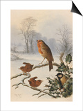 Christmas Robin and Friends Posters by Harry Bright