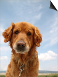 A Dog Enjoying The Outdoors On A Beautiful Summer Day Prints by  graphicphoto