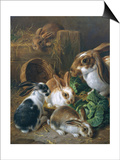 Feeding Time Prints by Alfred Barber
