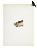 Head Of Smolt. a Fish Head Print by Fraser Sandeman
