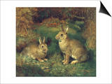 Rabbits Print by Henry Carter