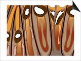 Tiramisu Prints by Belen Mena