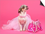 Tiny Glamour Dog With Pink Accessories Isolated Posters by  vitalytitov