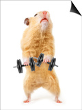 Hamster With Bar Isolated On White Poster by  IgorKovalchuk