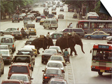 Thai Elephants Maneuver Their Way Through a Bangkok Traffic Jam in Downtown Prints