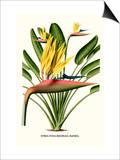 Yellow Bird of Paradise - Mandela's Gold Kunstdrucke von Louis Van Houtte