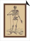 Skeleton with Shovel Kunstdrucke von Andreas Vesalius