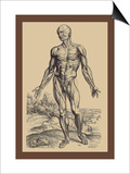 The First Plate of the Muscles Prints by Andreas Vesalius