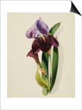 A Flag Iris Prints by Thomas Holland
