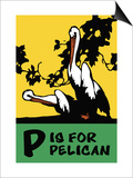P is for Pelican Posters by Charles Buckles Falls