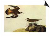 Pluviers kildir Affiches par John James Audubon