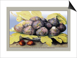 Dish with Figs, Fig Leaves and Small Pomegranates Art by Giovanna Garzoni