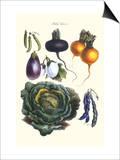 Vegetables; Eggplant, Beans, Cabbage, Turnips Art by Philippe-Victoire Leveque de Vilmorin