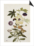 Milkweed, Poppy and Hibiscus with Butterflies and a Beetle Prints by Thomas Robins Jr