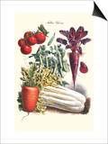 Vegetables; Carrot, Beet, Tomato, and Celery Poster by Philippe-Victoire Leveque de Vilmorin