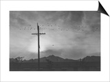 Birds on Wire, Evening Prints by Ansel Adams