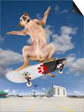 Skate Dog Prints by  graphicphoto