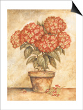 Potted Red Hydrangea Prints by Tina Chaden