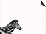 Zebra Isolated Prints by  Donvanstaden