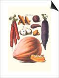 Vegetables; Carrot, Potato, Onion, and Pumpkin Posters by Philippe-Victoire Leveque de Vilmorin