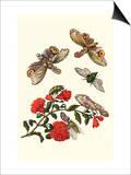 Sundown Cicada and a Peanut-Headed Lantern Fly Reprodukcje autor Maria Sibylla Merian