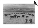 Cattle in South Farm Print by Ansel Adams