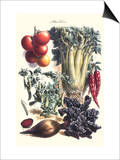 Vegetables; Beet, Hot Peppers, Celery, Tomatoes, and Peas in Pods Prints by Philippe-Victoire Leveque de Vilmorin