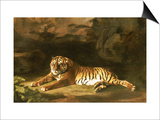 Portrait of the Royal Tiger, circa 1770 Posters by George Stubbs