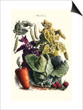 Vegetables; Cabbage, Peas, Strawberries, and Carrot Print by Philippe-Victoire Leveque de Vilmorin