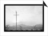 Birds on Wire Poster by Ansel Adams