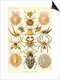 Spindlar Poster av Ernst Haeckel