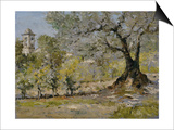 Olive Trees in Florence Art by William Merritt Chase