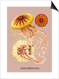 Jellyfish: Discomedusae Posters by Ernst Haeckel