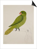 Blue-Backed Parrot Posters by J. Briois