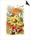 Reindeer Moss, Earth-Star, Scarlet Cup-Moss Posters af James Sowerby