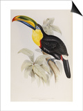 A Monograph of the Ramphastidae or Family of Toucans, 1834 Posters by John Gould