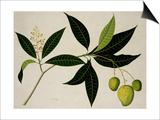 Mango Tree Print
