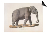 An Asian Elephant Prints